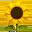 sunflower Emoji on Apple, iOS