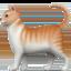 cat Emoji on Apple, iOS