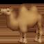 骆驼上的Facebook表情符号