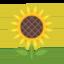 sunflower Emoji on Android, Google